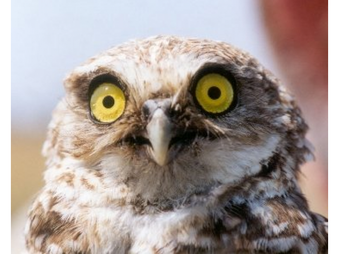 Owls research